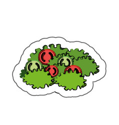 Letuce and tomato salad vector