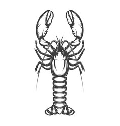 lobster icon isolated on white background vector image