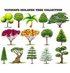 Ultimate isolated tree collection set vector