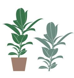 Ficus Flower vector image vector image