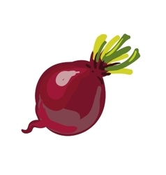 Red beetroot whole isolated on white background vector