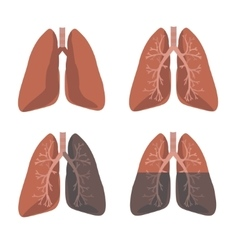Human lung anatomy set vector