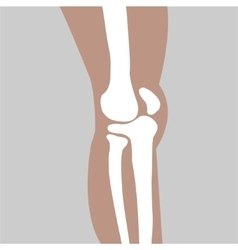 human knee joint vector image
