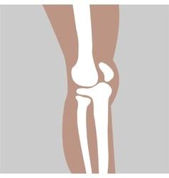 Human knee joint vector