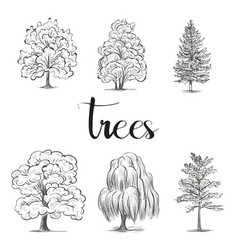 trees sketch set graphic forest vector image vector image