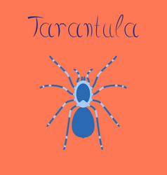 Flat on background spider tarantula vector