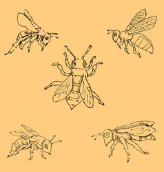 Flies sketch by hand pencil drawing by hand vector