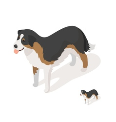Isometric 3d of sheep dog vector