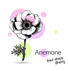 Anemone flower for wedding or birthday card vector