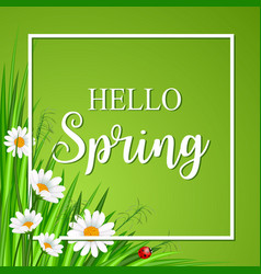 Hello spring banner with grass and flower vector
