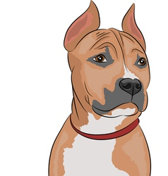 Staffordshire Terrier a vector image