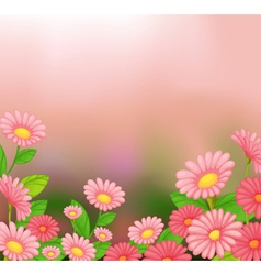 A view of the beautiful pink flowers vector image vector image