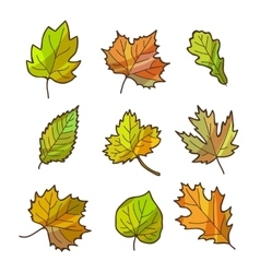 Autumn or fall leaves set isolated on white vector