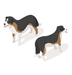 Isometric 3d of sheep dog vector image vector image