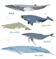 Set of 5 detailed whales from the world realistic vector
