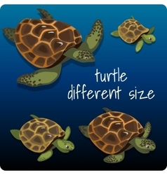 Four turtles with space for text vector