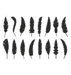 Feathers black and white silhouette vector image