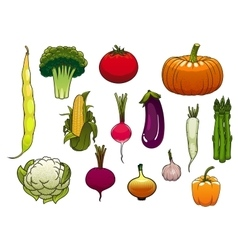 Fresh vegetables from the autumn harvest vector