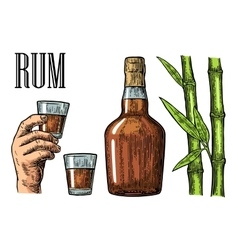 Glass and bottle of rum with sugar cane vector image vector image