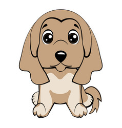 dog afghan hound breed vector image vector image