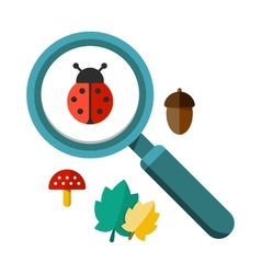 Ladybug and a magnifying glass vector image