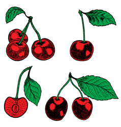 Set of hand drawn cherry design elements for vector