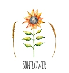 Watercolor sunflower and spica vector