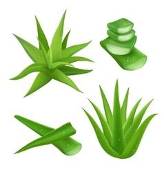 Aloe vera set vector