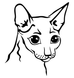 cornish rex vector image vector image