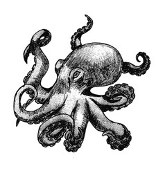 hand drawn octopus isolated on white background vector image