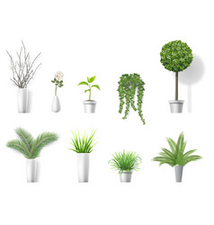 set home plants vector image vector image