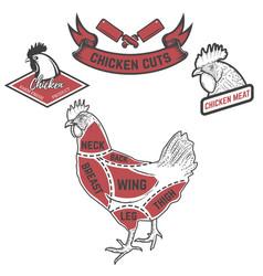 Chicken butcher diagram design element for poster vector