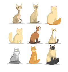 Cat different breeds set cute pet animal vector