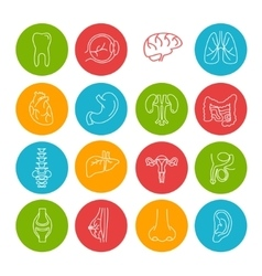 Human organs thin lines icon set vector