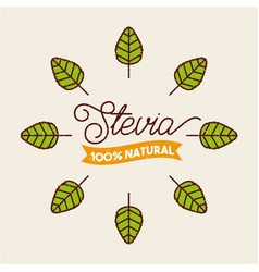 Plant stevia natural sweetener vector