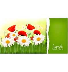 Background with red poppy and daisy and ripped vector