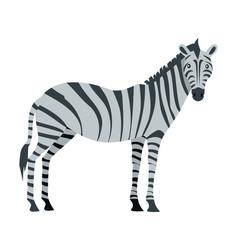 zebra cartoon isoated african equids horse vector image