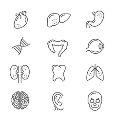 Human organs line icons vector