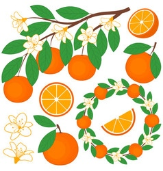Oranges Set vector image