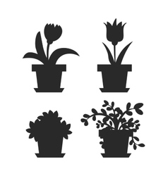 Home flowers in pot vector image