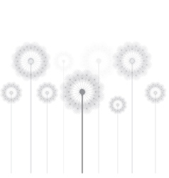 Dandelion thin line picture vector