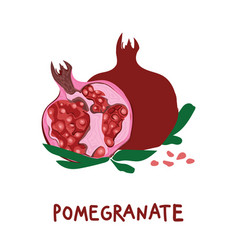 square card with hand drawn pomegranate and vector image vector image