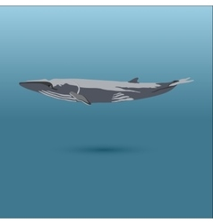 Finback whale realistic flat vector