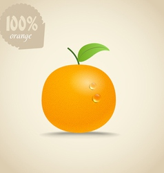 Cute fresh orange vector
