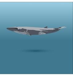 Finback whale realistic flat vector