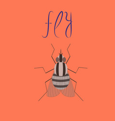 Flat on background insect fly vector