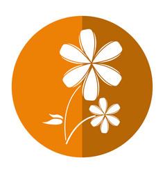 Plumeria flower decoration icon shadow vector