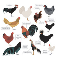 Poultry farming chicken breeds icon set flat vector