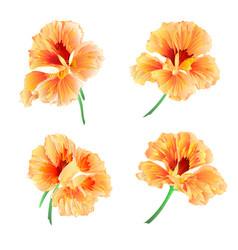 Spring flowers watercress vegetable healthy food vector