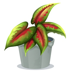 A plant in a pot vector image